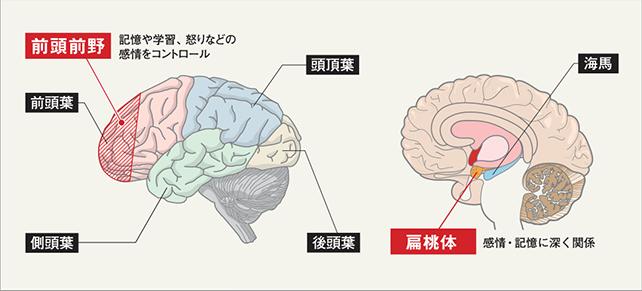 澤口俊之 脳の図 前頭前野 偏桃体
